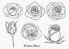 Vector de Rose fijado a mano dibujo Fotografía de archivo libre de regalías