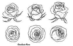 Vector de Rose fijado a mano dibujo Foto de archivo
