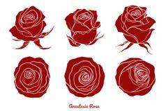 Vector de Rose fijado a mano dibujo Fotografía de archivo