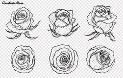 Vector de Rose fijado a mano dibujo Foto de archivo libre de regalías