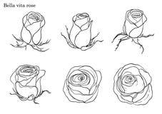 Vector de Rose fijado a mano dibujo Fotos de archivo libres de regalías