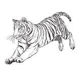 Vector de salto del monocromo del drenaje de la mano del tigre Fotografía de archivo libre de regalías
