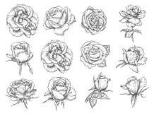 Vector de schetspictogrammen van bloemenrozen stock illustratie