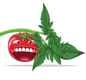 Vector de Toon del tomate Foto de archivo libre de regalías