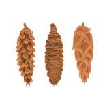 Vector de tres conos del pino Imágenes de archivo libres de regalías