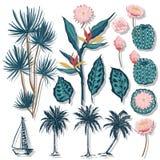 Vector de tropical, de las hojas coco, de las palmeras y del flowe del cactus stock de ilustración