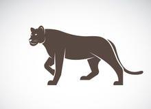 Vector de una hembra del león en el fondo blanco Imagen de archivo libre de regalías
