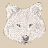 Vector de wolfshoofd van de handtekening Stock Afbeeldingen