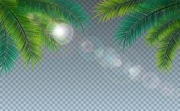 Vector de Zomerillustratie met Tropische Palmbladen op Transparante Achtergrond Uitheemse gewassen en Zonlicht voor Vakantie vector illustratie