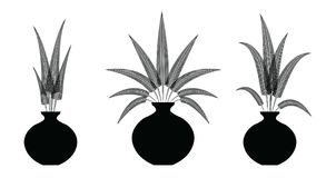 Vector decorate fern flowers in the vase. Set illustration Royalty Free Stock Photography