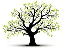Vector decoratieve boom en groene bladeren Royalty-vrije Stock Afbeelding