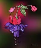 Vector decoratieve fuchsiakleurig tropische bloem Stock Foto's