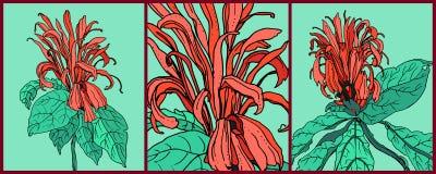 Vector decoratieve tropische bloemen - hoofdwacht Stock Foto's