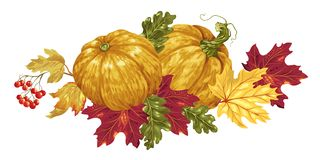 Vector decorative element with pumpkin and maple leaves and other elements. Vector decorative element with pumpkin and maple leaves and oak leaves and red vector illustration