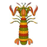 Vector Decorative Mantis Shrimp.  For Coloring Book. Marine Creature Isolated On White Background Stock Photos