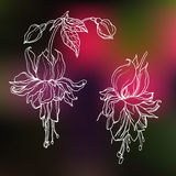 Vector decorative outline fuchsia tropical flower Royalty Free Stock Images