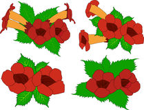 Vector decorative vines campsis Royalty Free Stock Images