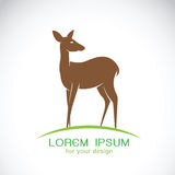 Vector of a deer design on a white background. Stock Photo