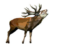 Vector deer on white Royalty Free Stock Images