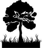 Vector del árbol de la silueta Imágenes de archivo libres de regalías