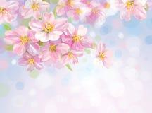 Vector del árbol floreciente de la primavera con el backgr del bokeh Imagen de archivo libre de regalías