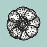Vector del bosquejo del bollo Fotos de archivo libres de regalías