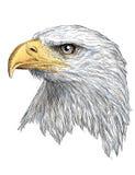 Vector del color de la cabeza de Eagle stock de ilustración
