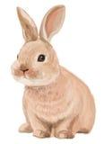 Vector del conejo lindo aislado en el fondo blanco Imagenes de archivo