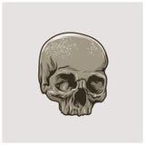 Vector del cráneo Fotografía de archivo libre de regalías