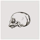 Vector del cráneo Imagen de archivo libre de regalías