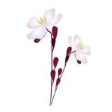 Vector del diseño floral Foto de archivo libre de regalías