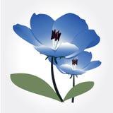 Vector del diseño floral Fotografía de archivo