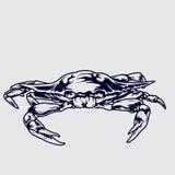 Vector del ejemplo del cangrejo Imagen de archivo