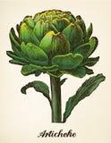 Vector del ejemplo del vintage de la alcachofa Foto de archivo