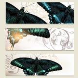 Vector del folleto fijado con las mariposas stock de ilustración