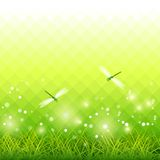 Vector del fondo de la estación de la libélula de la hierba verde Fotos de archivo