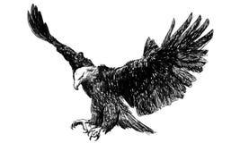 Vector del monocromo de la mosca de Eagle Fotos de archivo