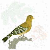 Vector del motivo del pájaro y de la Navidad de la nieve Fotografía de archivo libre de regalías