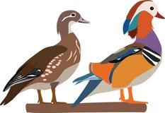 Vector del pato de mandarín imagen de archivo libre de regalías
