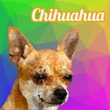 Vector del polígono de la cabeza de perro de la chihuahua Imágenes de archivo libres de regalías