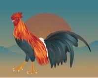 Vector del pollo en la mañana Fotos de archivo libres de regalías