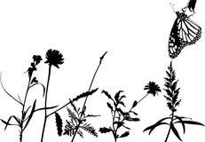 Vector del prado Imagenes de archivo