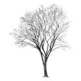 Vector del árbol - mano drenada Imagenes de archivo