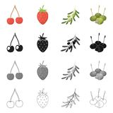 Vector design of berry and fruit logo. Collection of berry and redberry  stock vector illustration. Vector illustration of berry and fruit icon. Set of berry vector illustration