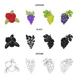 Vector design of berry and fruit symbol. Collection of berry and redberry  stock vector illustration. Vector illustration of berry and fruit sign. Set of berry stock illustration
