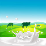 Vector design with cow, milk splash Stock Photos