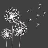 Vector design elements in strict floral style. Vector hand drawn design elements in strict floral style - blowball and fennel Royalty Free Stock Image