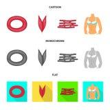 Vector design of fiber and muscular sign. Set of fiber and body stock vector illustration. stock illustration