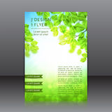 Vector design of the flyer with leaves and sun Stock Image