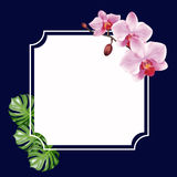 Vector design frame Stock Image